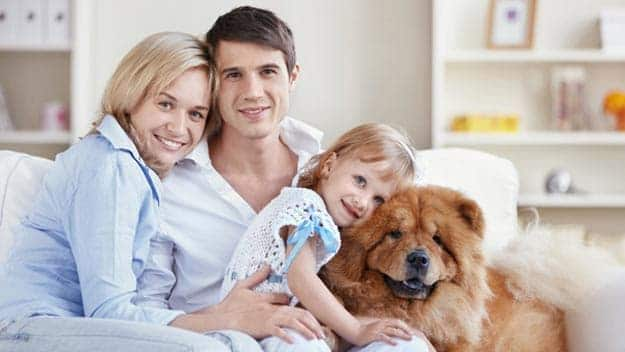 Wills & Trusts dog-young-family Direct Wills Irchester